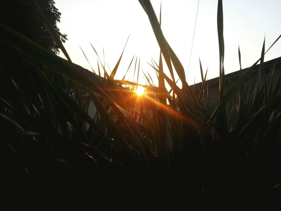 Sahara's running in hainan Sunset Outdoors Sky Tree Plant Sun Beauty In Nature Sa虾ra
