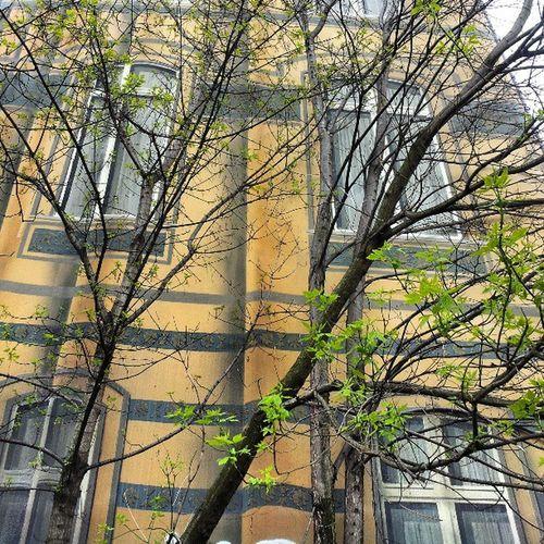 Just an illusion! Building Springstarted Greenleaves Windows Wallart Illusionofthecity Yellow Berlin Trees Hidden