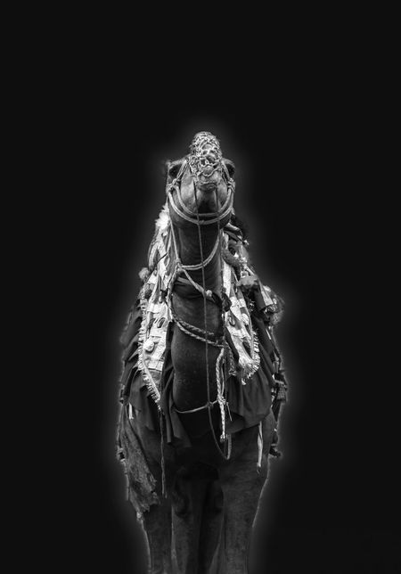 Celebration No People Studio Shot Black Background Indoors  Night Close-up Animal Themes Mammal Night Black Black Background EyeEmNewHere Nikon D810 Low Angle View Outdoors Manipulation Studio Lost In Paradise Illumination