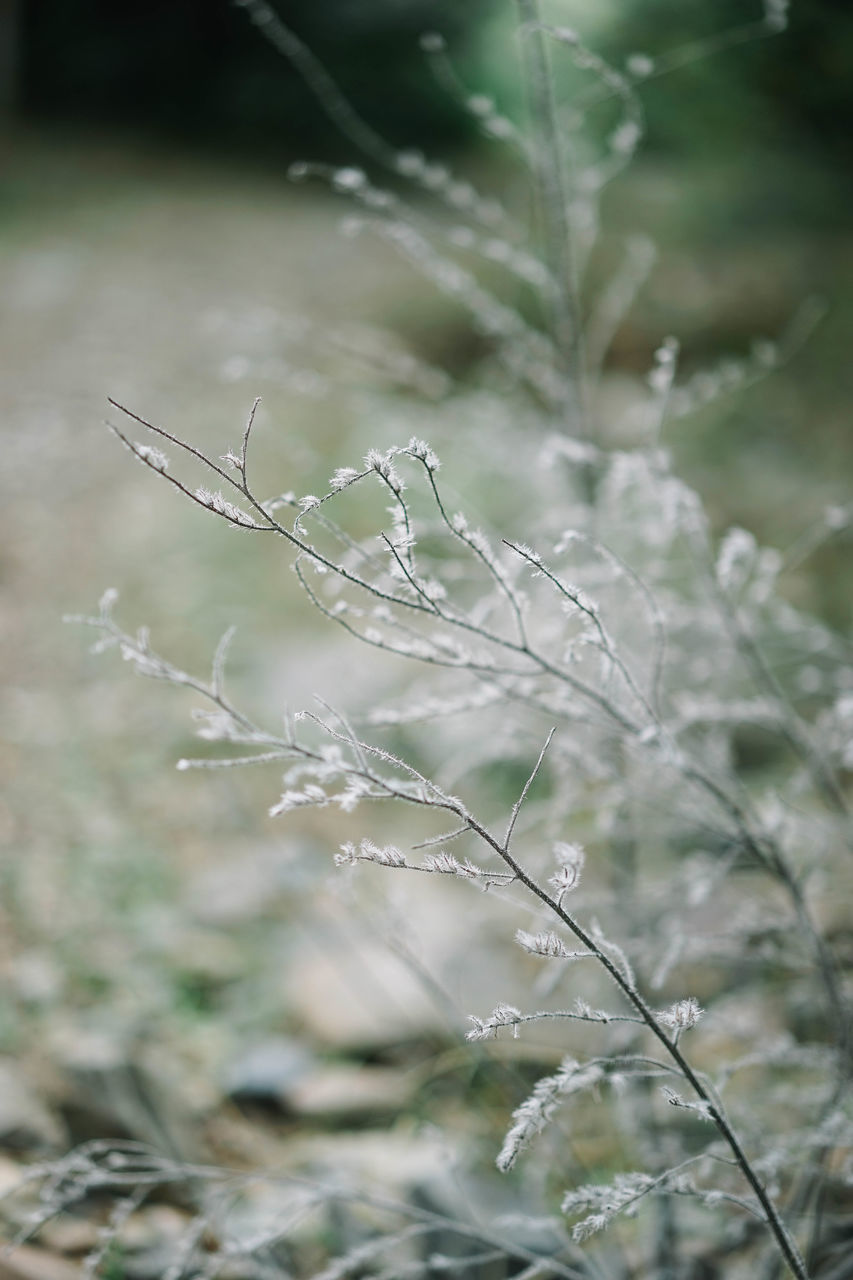 nature, outdoors, day, no people, growth, plant, tranquility, beauty in nature, close-up, fragility