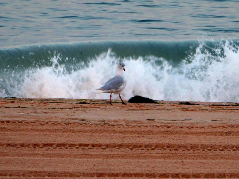 Mach mal nich so ne Welle😅 Seagull At The Beach Waves, Ocean, Nature Sea Wave For The Love To Life Enjoying Life Enjoying The View For My Friends 😍😘🎁 My Soul's Language Is📷 Tranquil Scene Beauty In Nature Thankful🦄 You Raise Me Up✨ Lucky Me🦄 Lovelovelovetheocean Good Night&sweetest Dreams 🦄 Been There. Lost In The Landscape An Eye For Travel