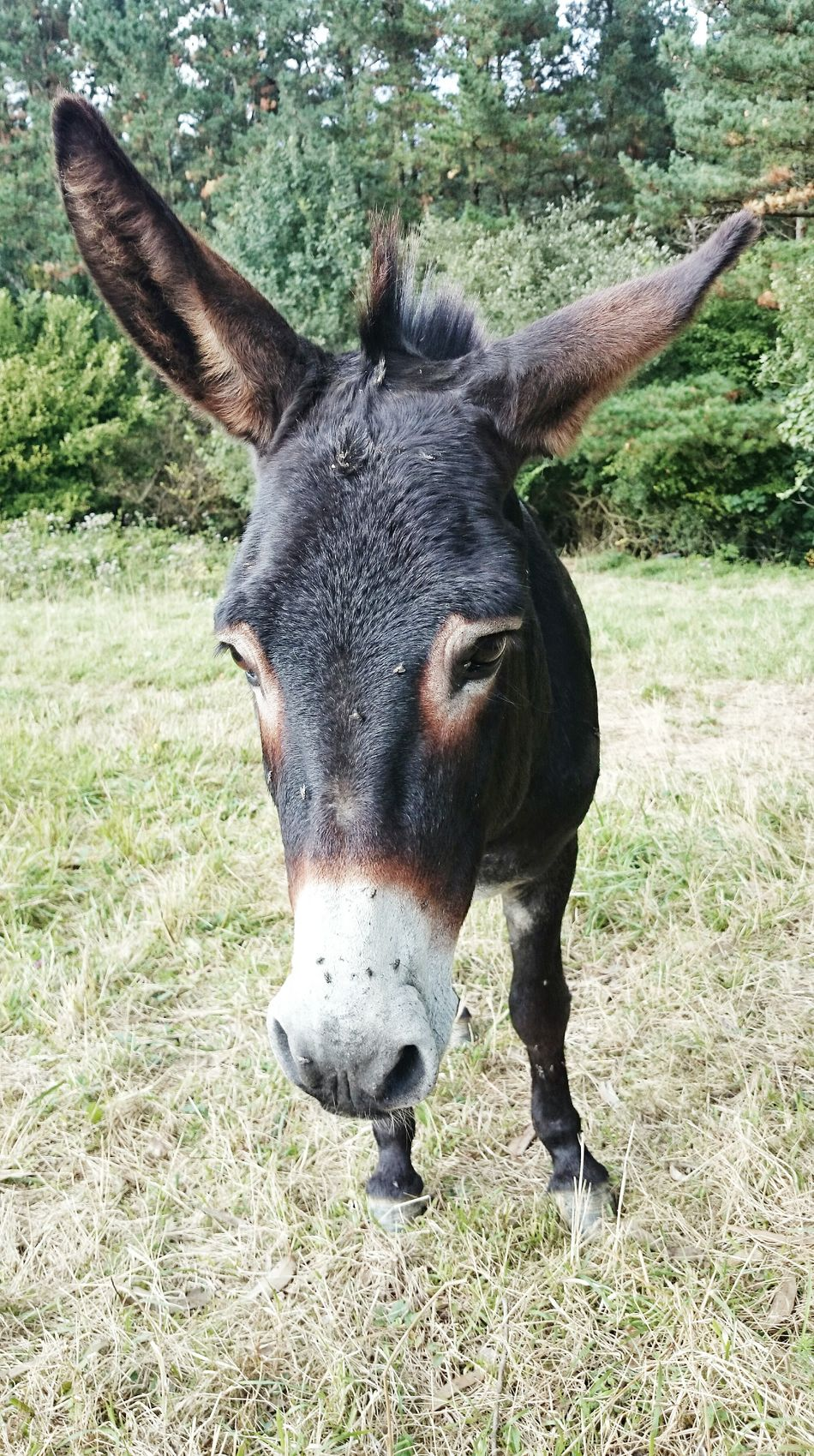 Beautiful stock photos of donkey, Animal, Animal Face, Animal Themes, Close-Up