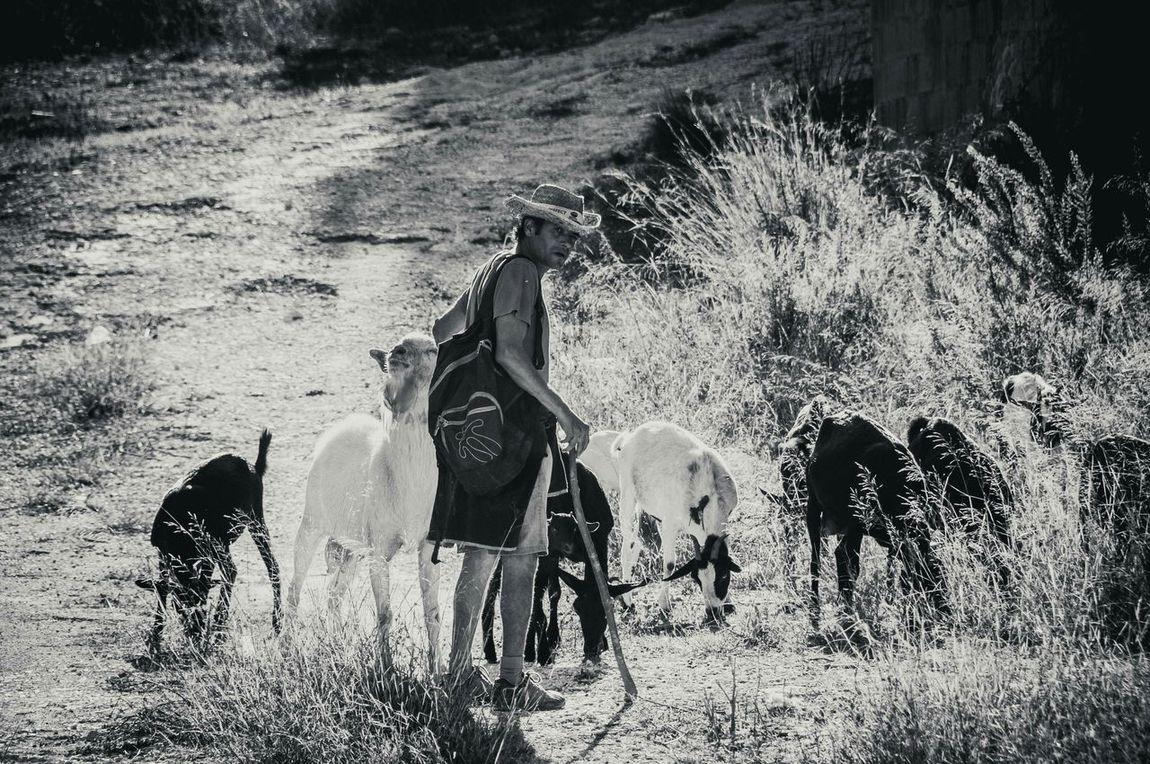 His family.... . Goats Untold Stories EyeEm Gallery Eyeem_allshots Popular Eyeem Black And White EyeEm Nature Lover People Watching Protecting Where We Play Monochrome