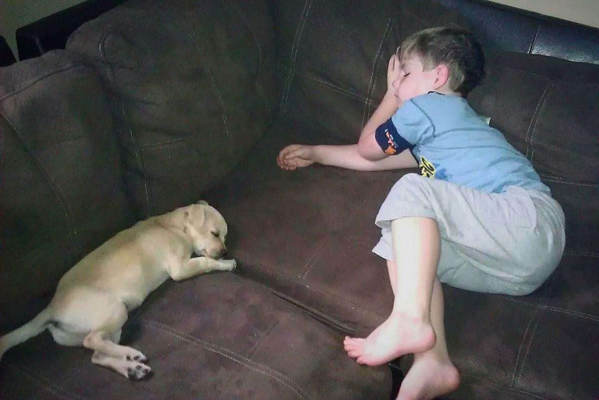 Taking Photos Sleep Sleeping Sleeping Dog Boy And Dog Boy Sleeping Boy Time For Rest