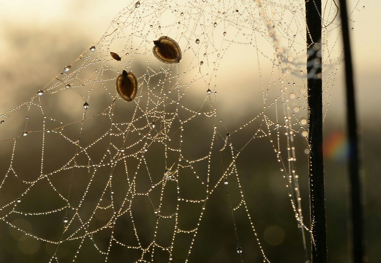 spider web, focus on foreground, web, nature, close-up, fragility, spider, drop, outdoors, no people, water, day, beauty in nature, animal themes, freshness