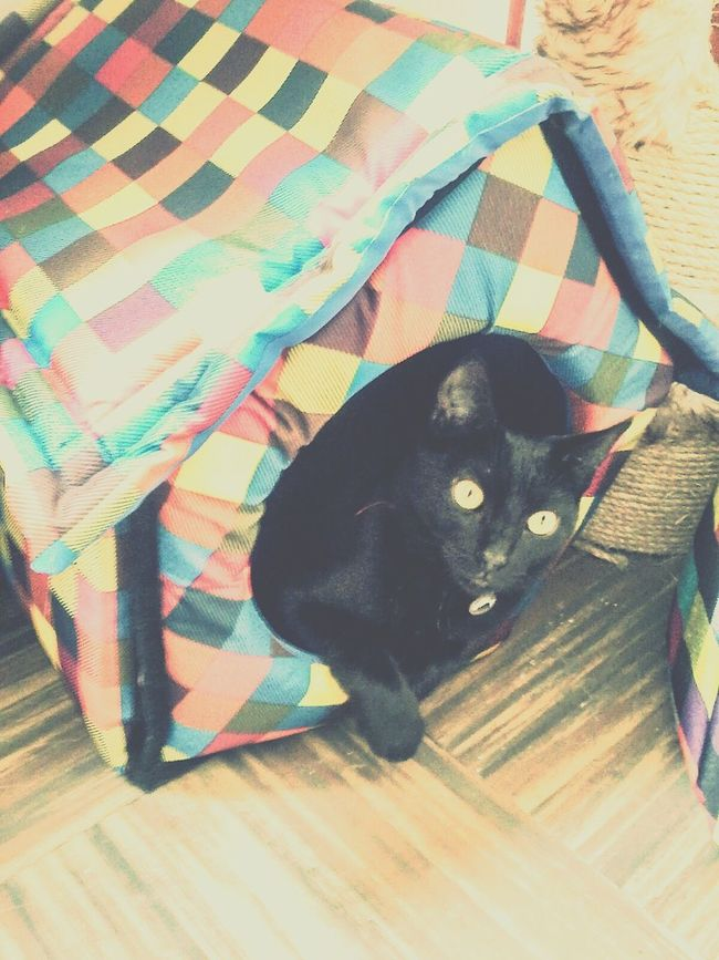 The first year HappyBirthday valentina The Best Cat