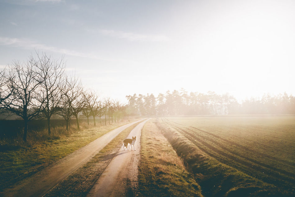 Beautiful stock photos of hunde, Animal Themes, Bare Tree, Beauty In Nature, Canine