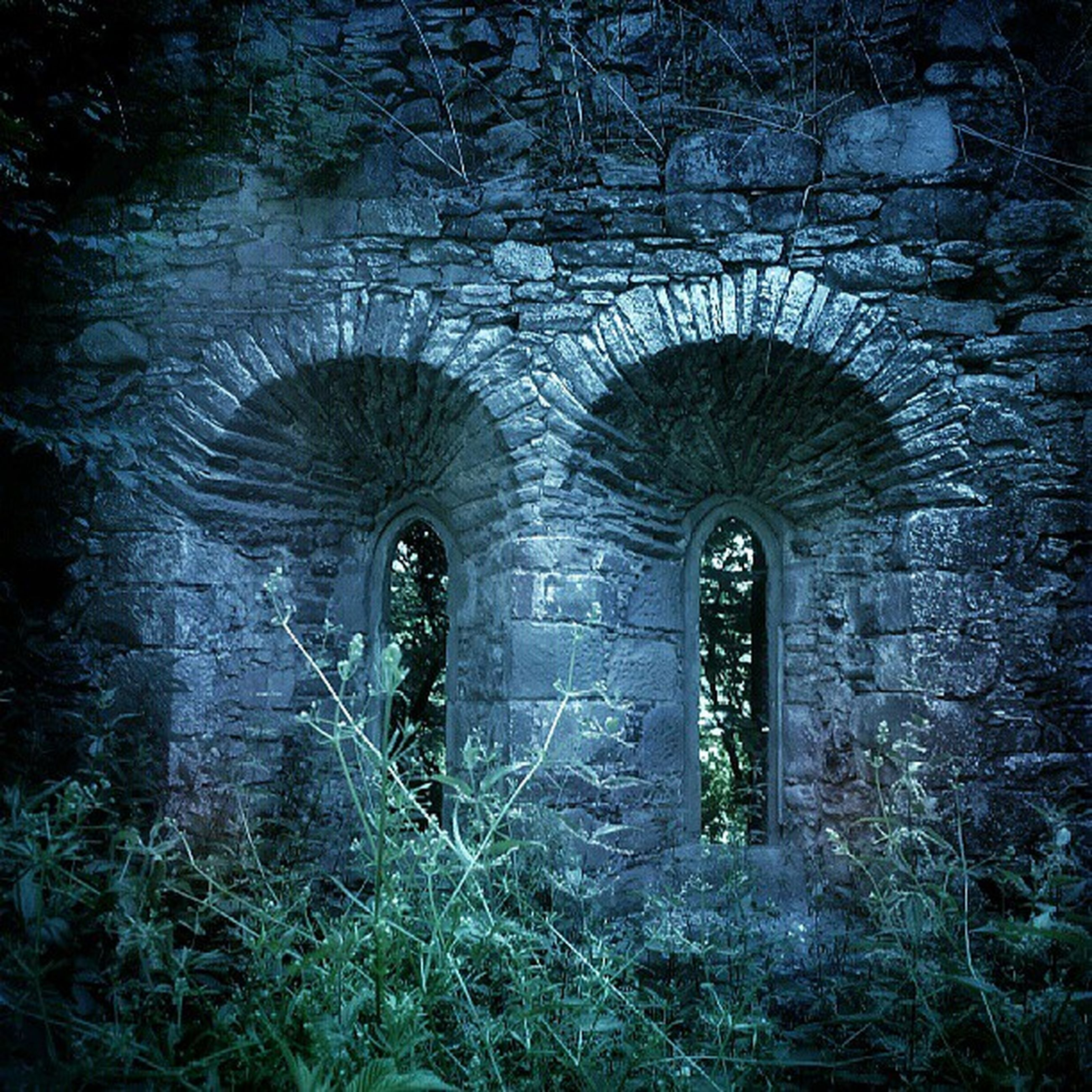 arch, architecture, built structure, old, abandoned, damaged, wall - building feature, indoors, stone wall, brick wall, weathered, deterioration, tunnel, obsolete, day, no people, tree, archway, run-down, stone material