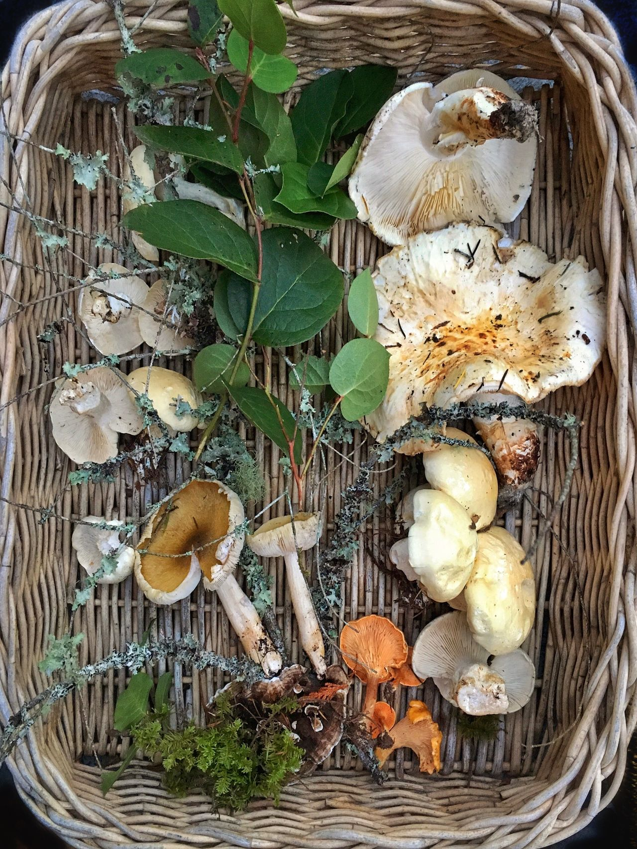 Natures gifts Outdoors Healthy Eating Close-up No People Beauty In Nature Freshness Forest Photography Mushrooms Plant Still Life Fall Beauty Matsutake