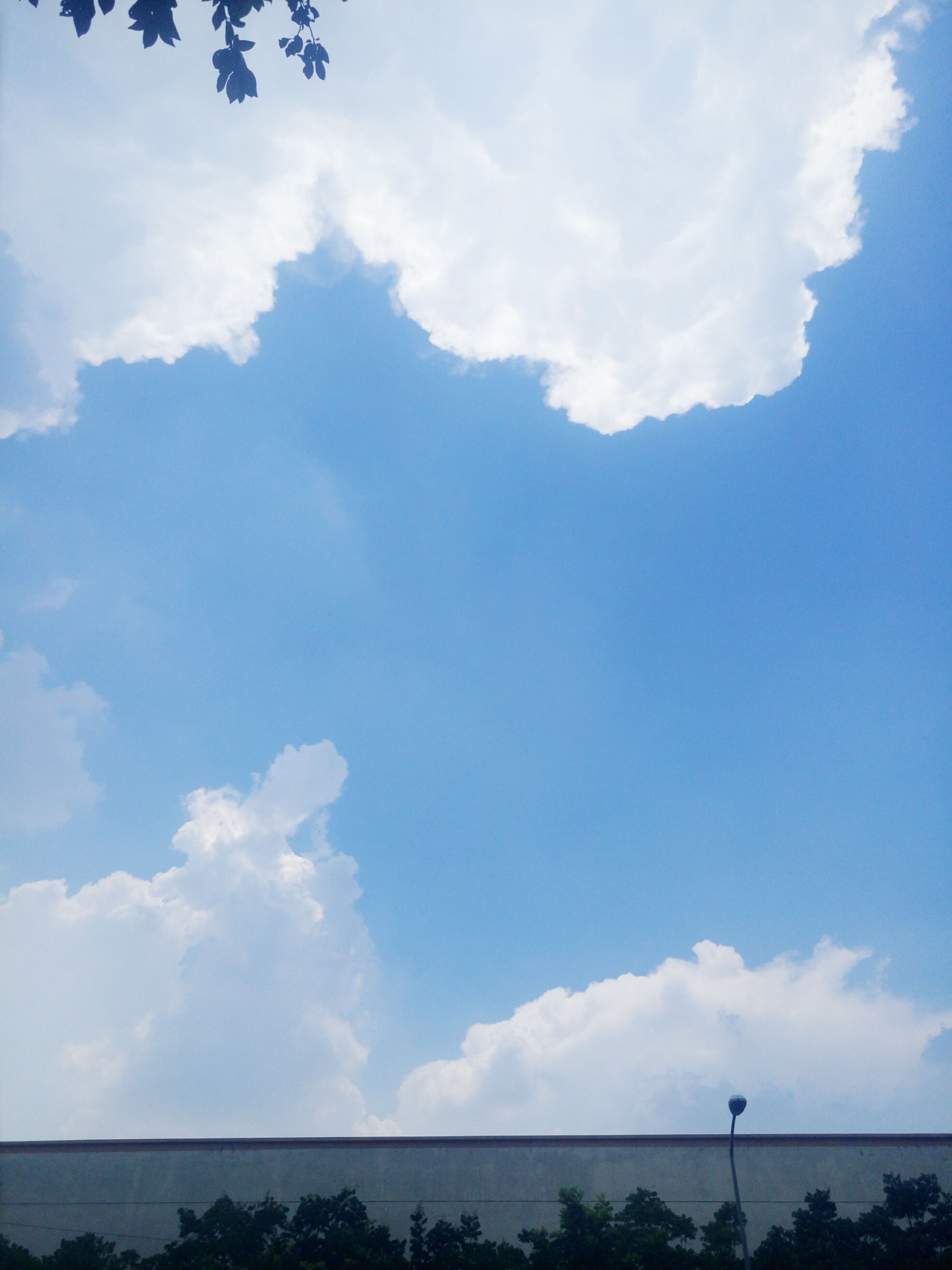 cloud - sky, sky, day, nature, beauty in nature, tranquility, no people, scenics, low angle view, outdoors, tranquil scene, tree