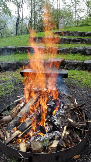 A high burning campfire Flame Heat - TemperatureTree Burning Outdoors Nature Bonfire Fire Pit Day Grass