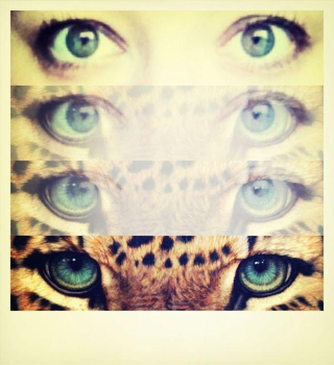 EyeTiger | I've got the eye tiger - Katyperry