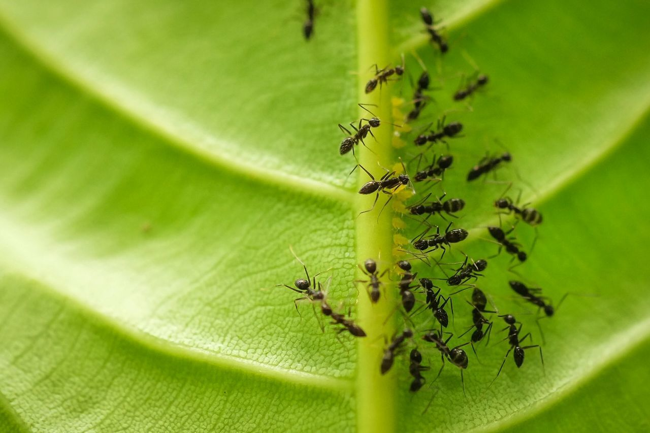 Beautiful stock photos of army, Animal Themes, Animal Wildlife, Animals In The Wild, Ant