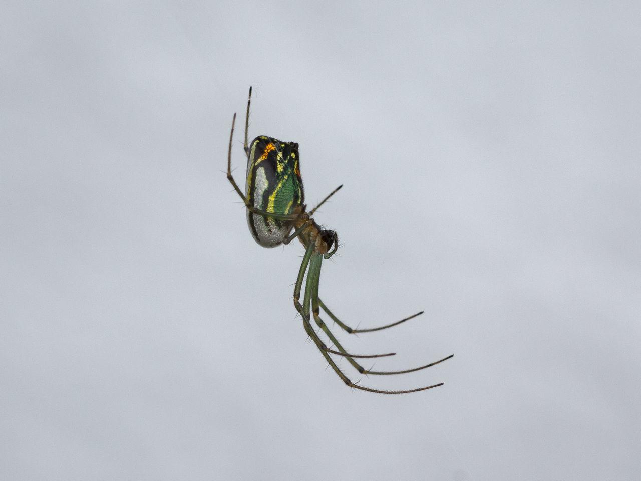 Beautiful stock photos of spinnen, Animal Leg, Animal Themes, Animal Wildlife, Animals In The Wild