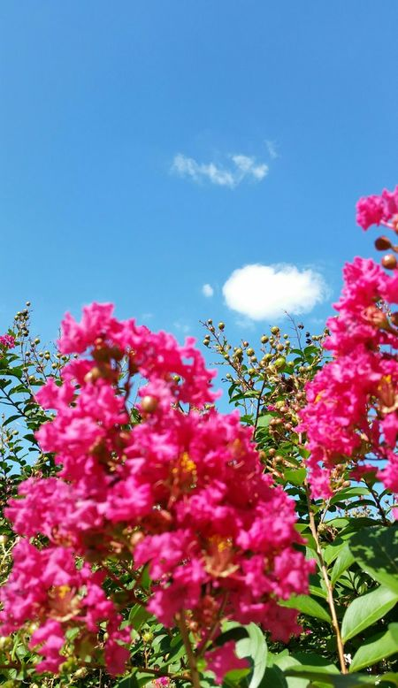 Learn & Shoot: Layering Unedited Flowers And Clouds took this photo literally Outside My Front Door Showcase April