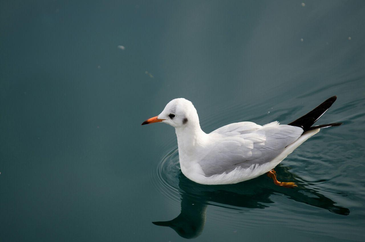 Beautiful stock photos of river, Beak, Bird, Close-Up, Day