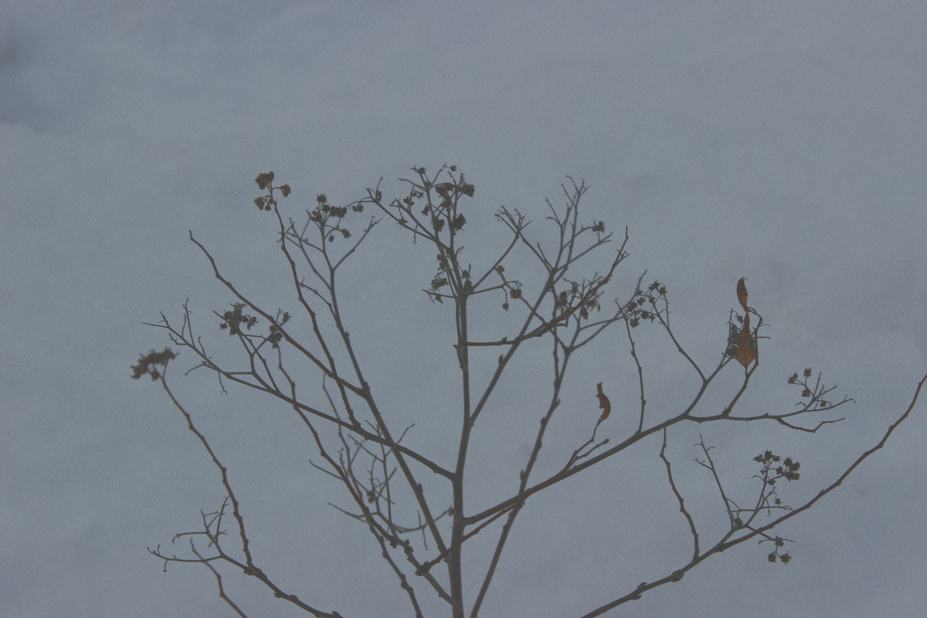 bird, bare tree, animal themes, tree, branch, no people, animals in the wild, nature, perching, sky, outdoors, day, beauty in nature