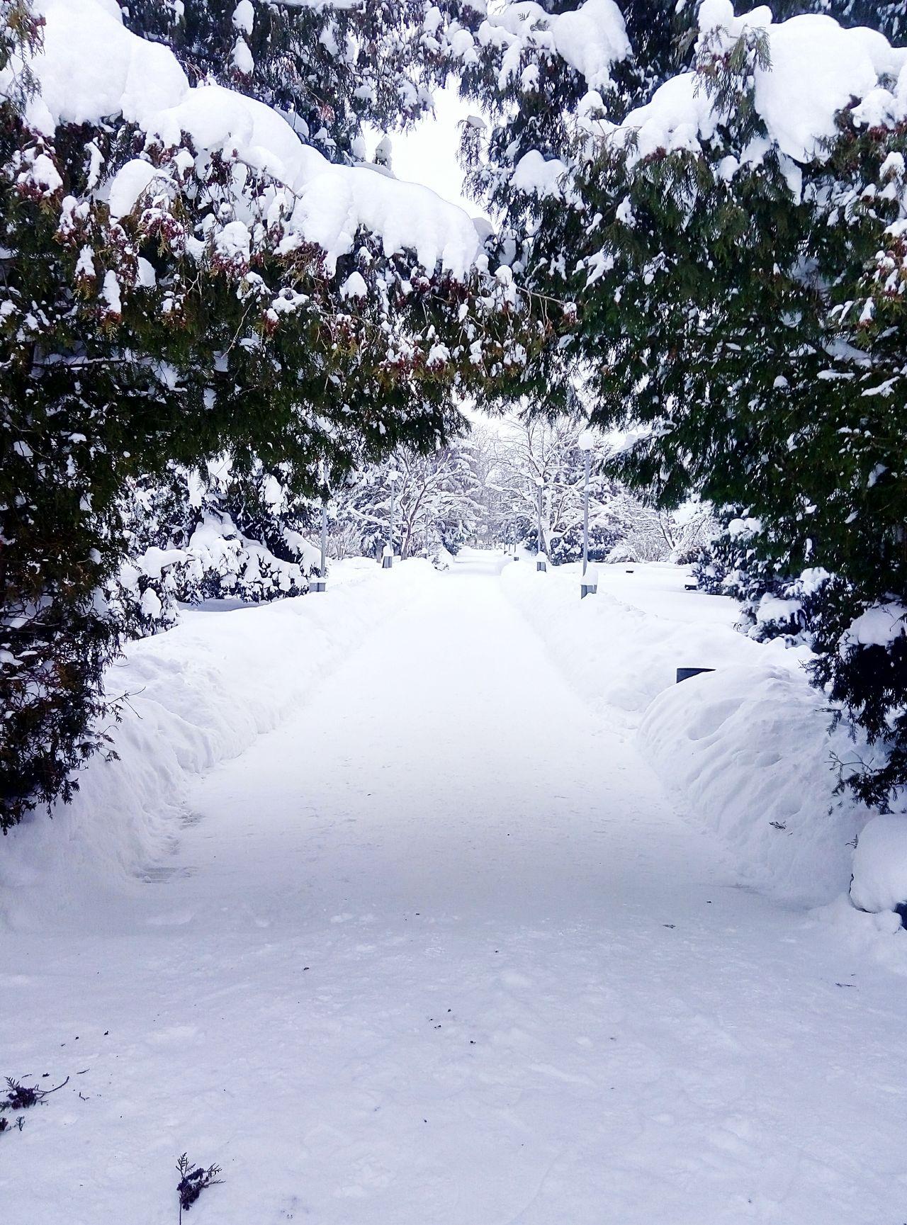 паркпобеды зима зима2016 родники рдк Winter Winter2016 Wintertime Rodniki
