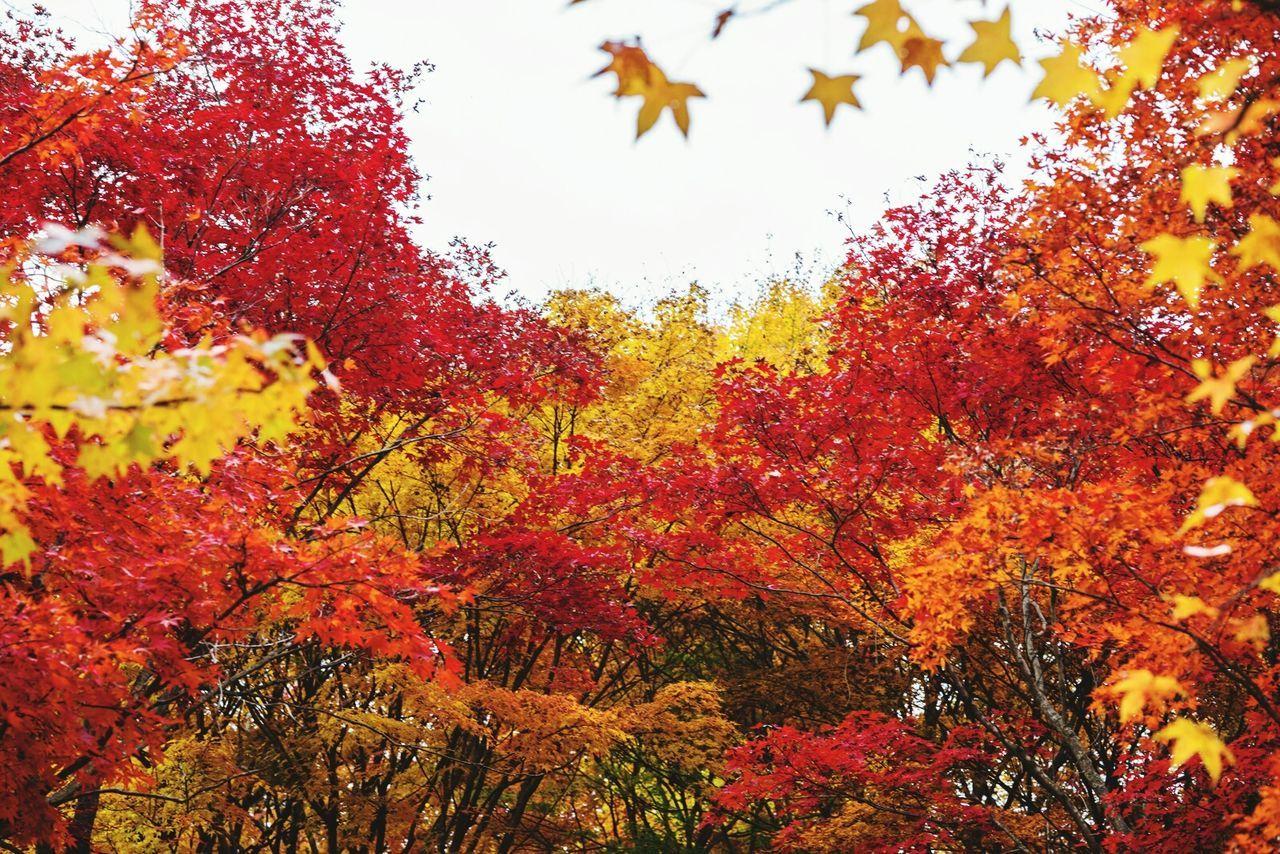 가을 단풍 알록달록 가을🍁 단풍 가을풍경 First Eyeem Photo