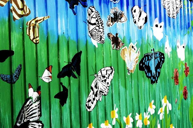 『butterfly』 Taking Photos Nikond5300 Hanging Hanging Panoramic Full Frame Close-up Large Group Of Objects In A Row Green Color Retail  Various History