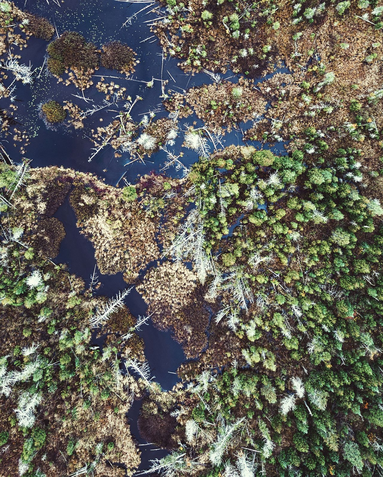 Growth Tree Beauty In Nature Scenics Travel Nature Lake Aerial Photography Drone  Water