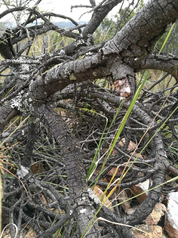 Tree Nature Growth Outdoors Branch No People Forest Low Angle View Full Frame Day Beauty In Nature Backgrounds Close-up Sky South Africa Rietfontein Nature Reserve Johannesburg South Africa Natural Bush Aesthetics Firewood Bonfire Wood