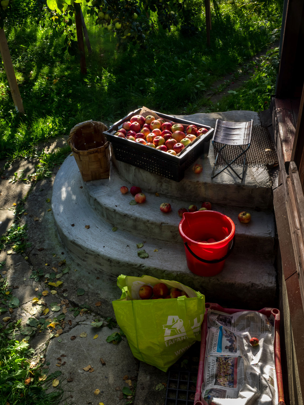 Russia, Moscow, house, apples, autumn, harvest, fruit, food, food Apples Autumn Close-up Day Food Food And Drink Food And Drink Food Photography Freshness Front Or Back Yard Fruit Harvest Healthy Eating House Moscow Nature No People Outdoors Red Russia Table Tree