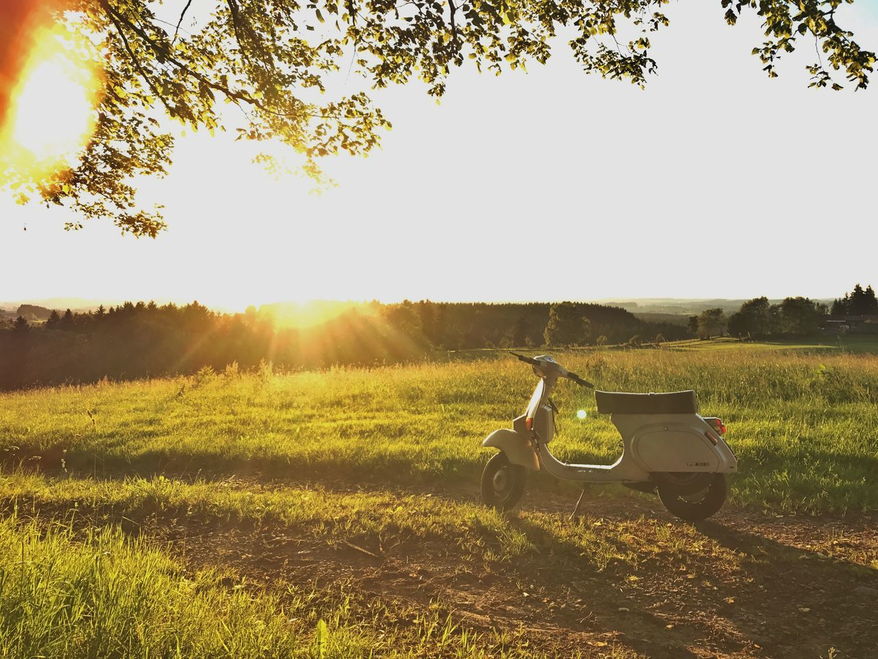 Sunlight Tree Field Grass Sport One Man Only Nature Bicycle Outdoors Golf Course One Person Leisure Activity Day Adult Only Men Golf Adults Only Men Sunset People Vespa