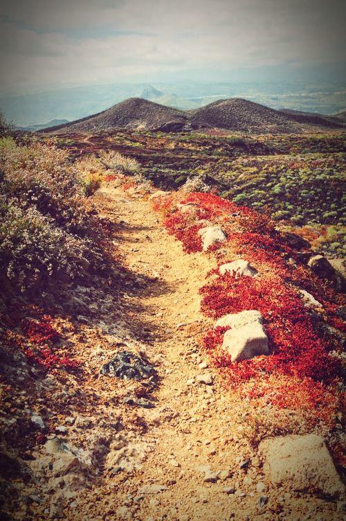 hiking path through Montana Amarilla landscape on atlantic coast of Tenerife. old vulcanos in background. Cactus Canary Islands Succulents Montana Amarilla Teneriffa Tenerife Vulcano Hiking Path