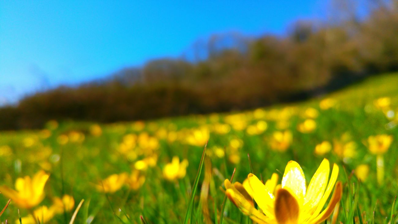 Buttercups Taking Photos Nature Photography Hiking