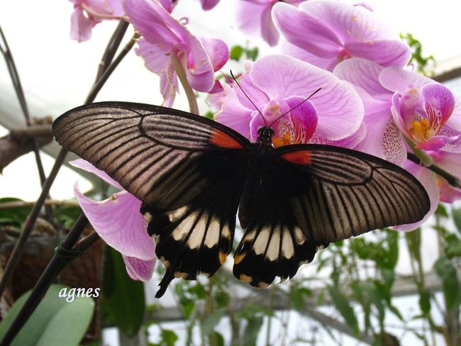 My_butterfly_collection ForTheLoveOfPhotography BeautyAndMadness Hanging Out Goodmorning, Happy Sunday my lovely friends.