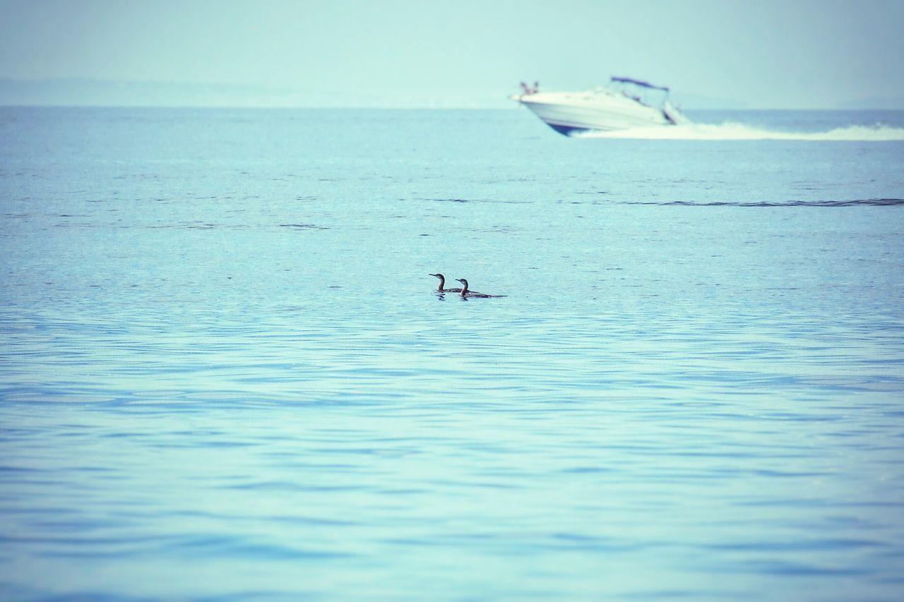 Seaside Sea Seabirds Speedboat Sunbathing Blue Soft Man And Nature Holiday Shades Of Blue Calm Sea Enjoying Life Enjoying The Sun Croatia Pastel Power Pastel Blue Landscape Landscapes With WhiteWall Blue Wave