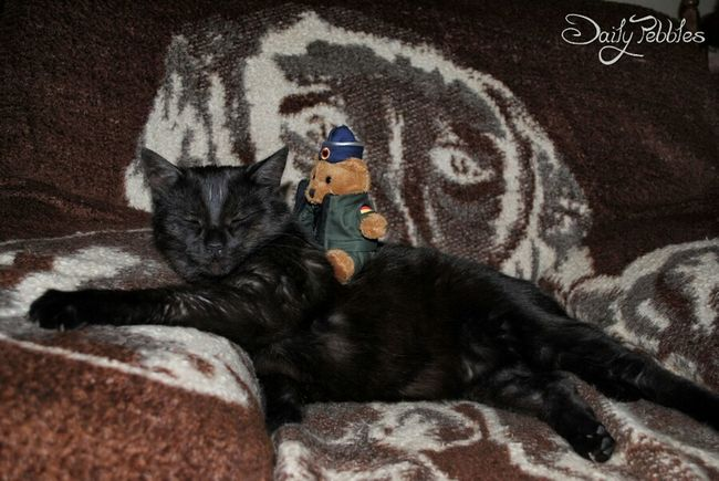 Pebbles CDRE Cats Cat Pet Animal NelsonsAdventures Streamzoofamily Playing With The Animals Hello World Catlovers Teddybear
