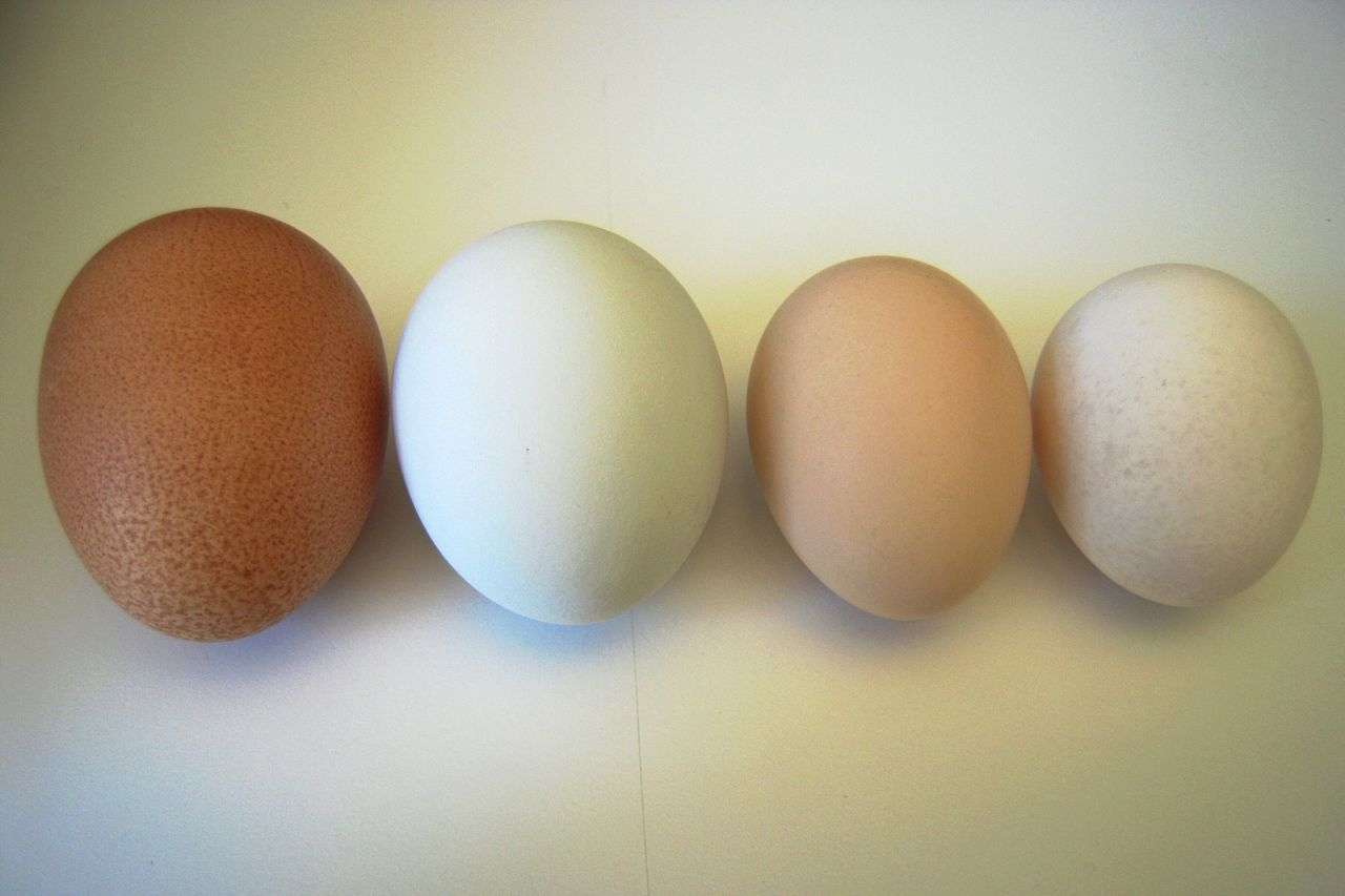 I got these eggs from Martha Stweart. Yes, really. Farm Eggs Colored Eggs Fresh Eggs Horizontal Eggs