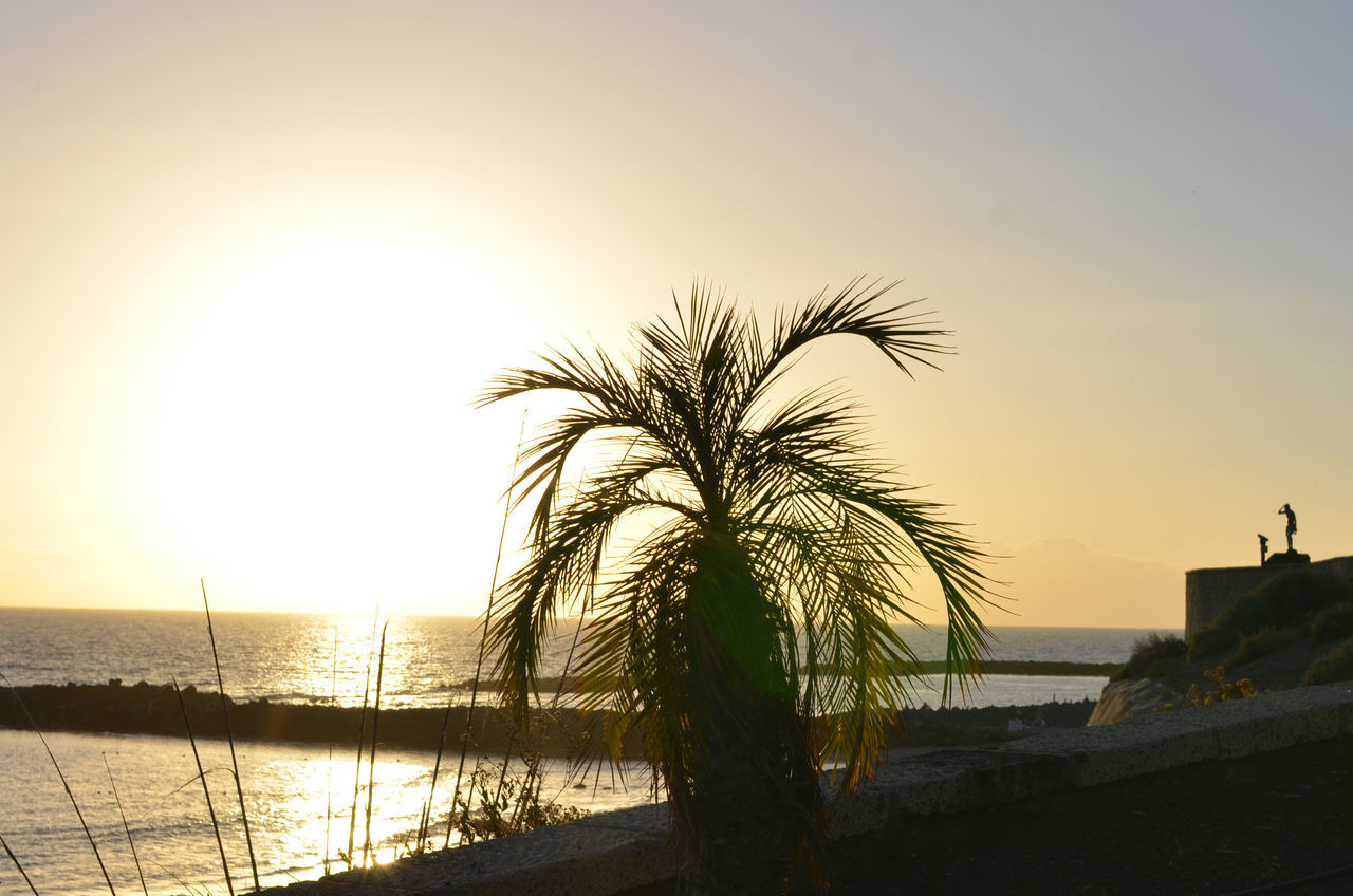 43 Golden Moments Beauty In Nature Calm Clear Sky Coastline Del Duque Horizon Over Water Idyllic Palm Palm Tree Palm Tree Palm Trees Scenics Sea Shore Summer Sun Sunlight Sunset Sunset #sun #clouds #skylovers #sky #nature #beautifulinnature #naturalbeauty #photography #landscape Sunset Silhouettes Sunset_collection Sunsetporn Sunsets Tenerife