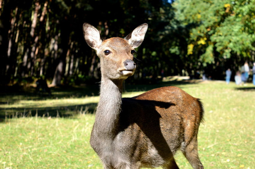 Animal Bambi Beautiful Creatures Beauty In Nature Close Up Close-up Free Green Hirsch Nature Wild Animals Ziegen