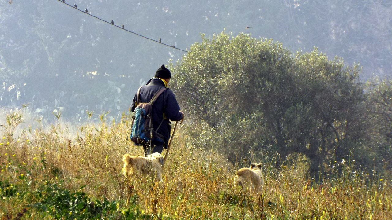 Cross-country Eat Flock Of Sheep Lifestyle Pasturage Shepherd Shepherd With Guide Dogs Wool