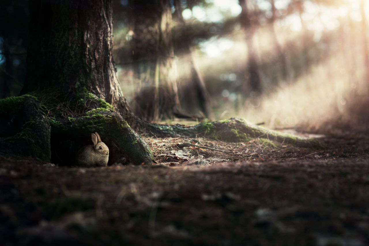 Into the rabbit hole Animal Themes Animals In The Wild Day Forest Hole Mammal Nature Nature No People One Animal Outdoors Outside Outside Photography Rabbit Squirrel Sunrays Sunrise Tree Tree Trunk