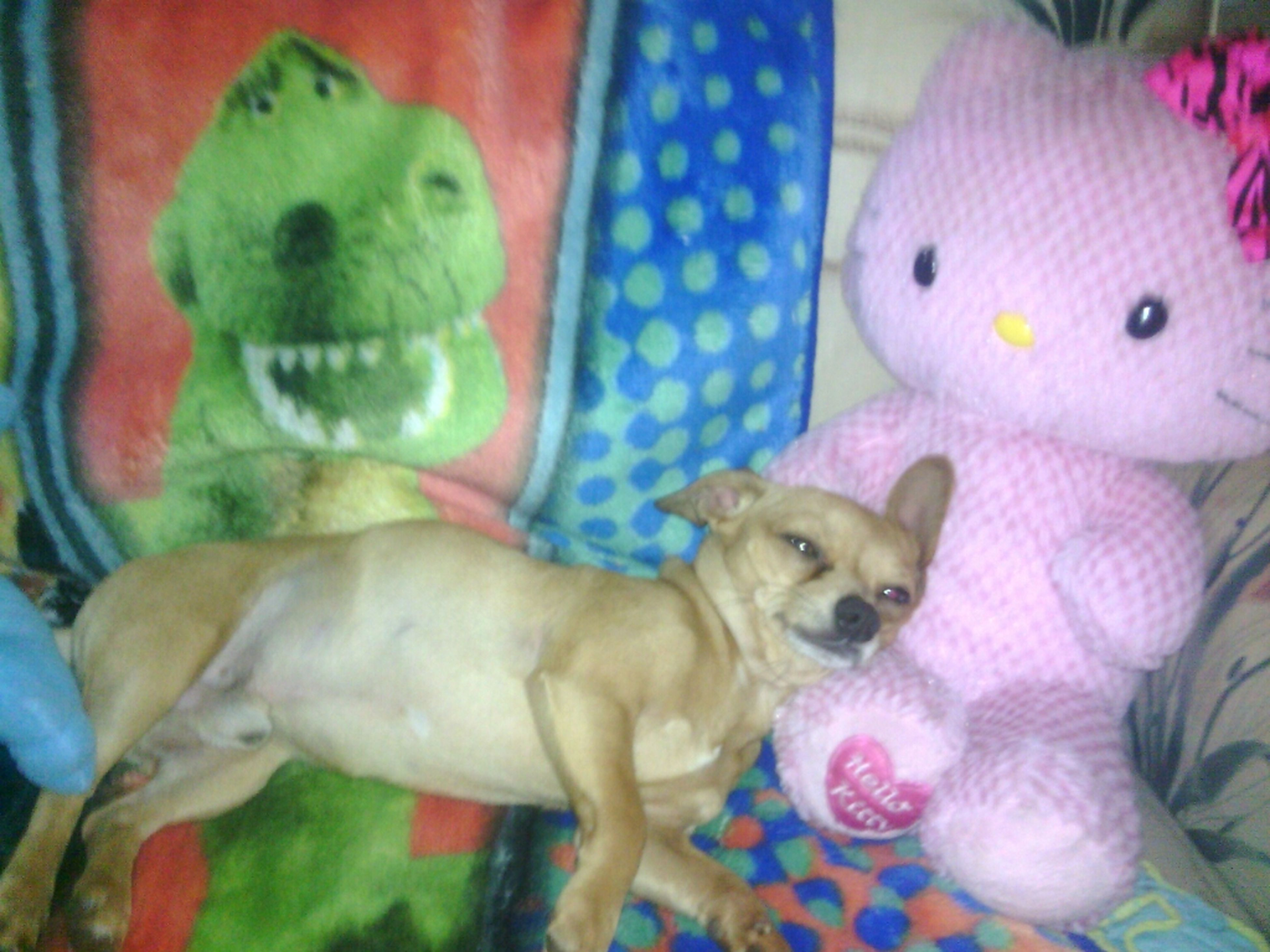 My Doggy Pancho <3