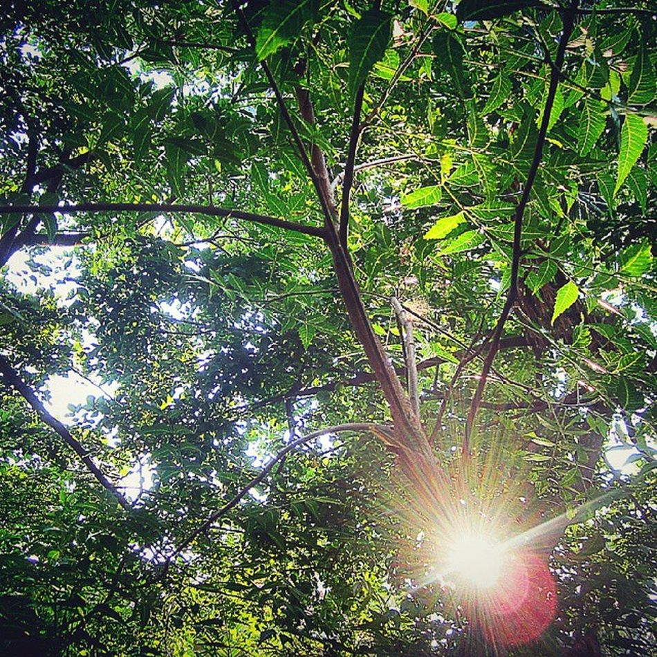 Sun Light Trees PROTECT_NATURE Beauty
