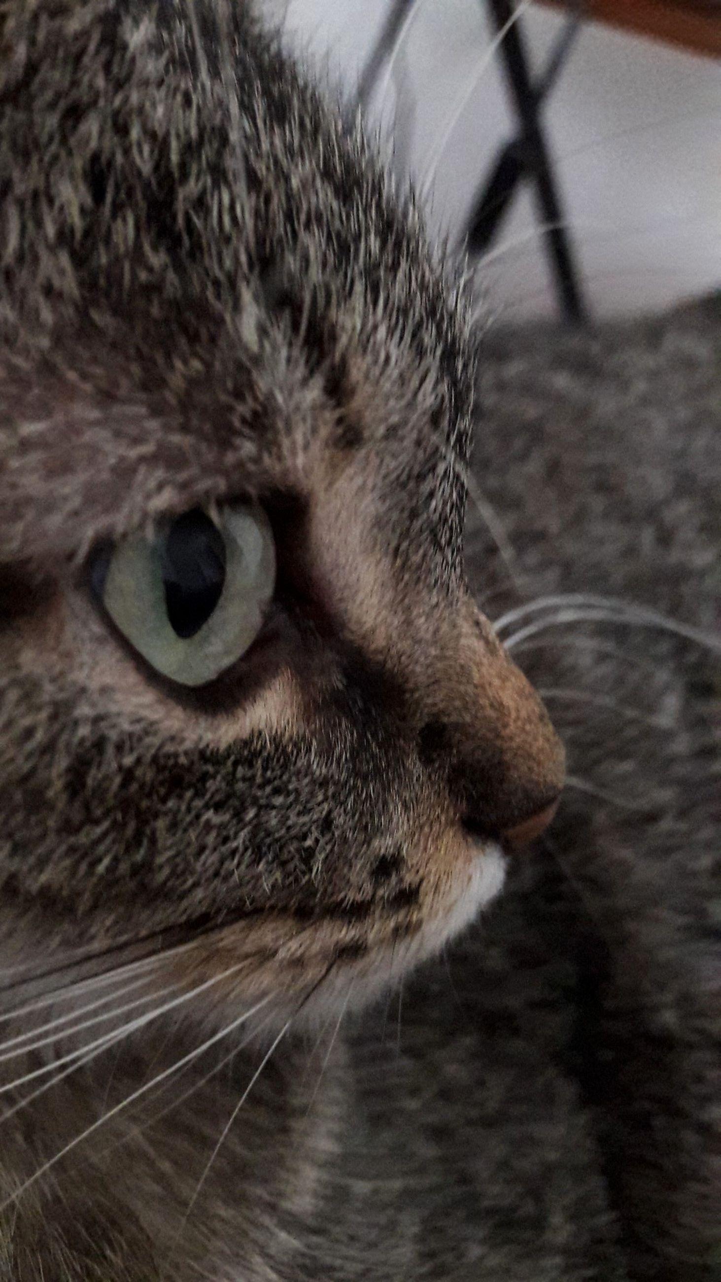 one animal, domestic cat, domestic animals, pets, animal themes, mammal, feline, close-up, animal head, cat, no people, animal eye, indoors, yellow eyes, day