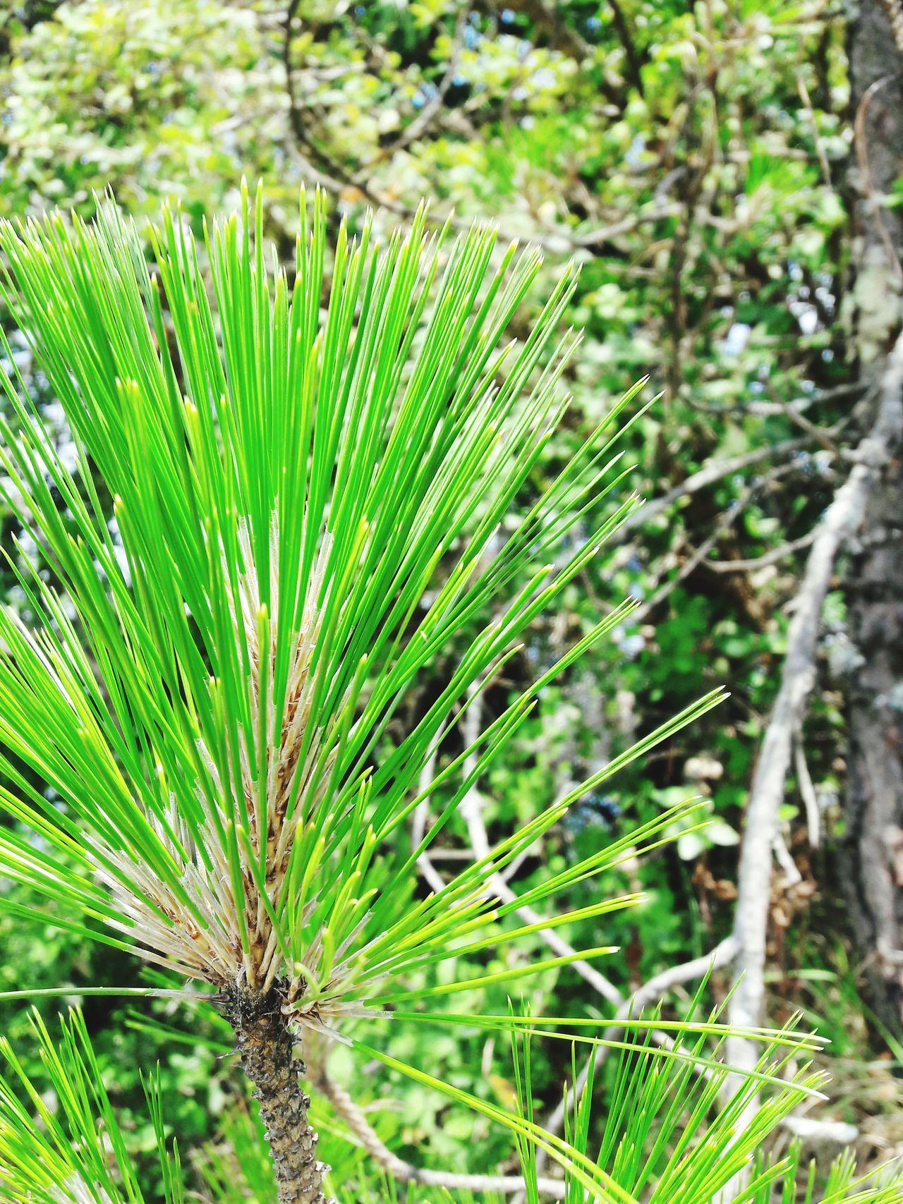 A close shot Close Shot Green Leaf Day Time