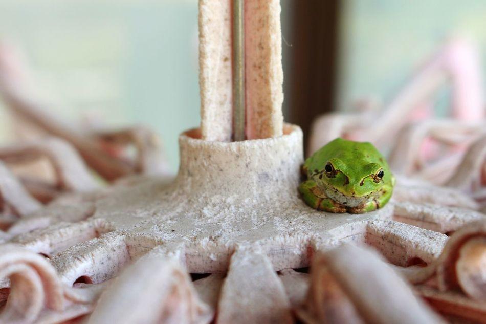 Beautiful stock photos of frog, Amphibian, Animal Themes, Animal Wildlife, Animals In The Wild