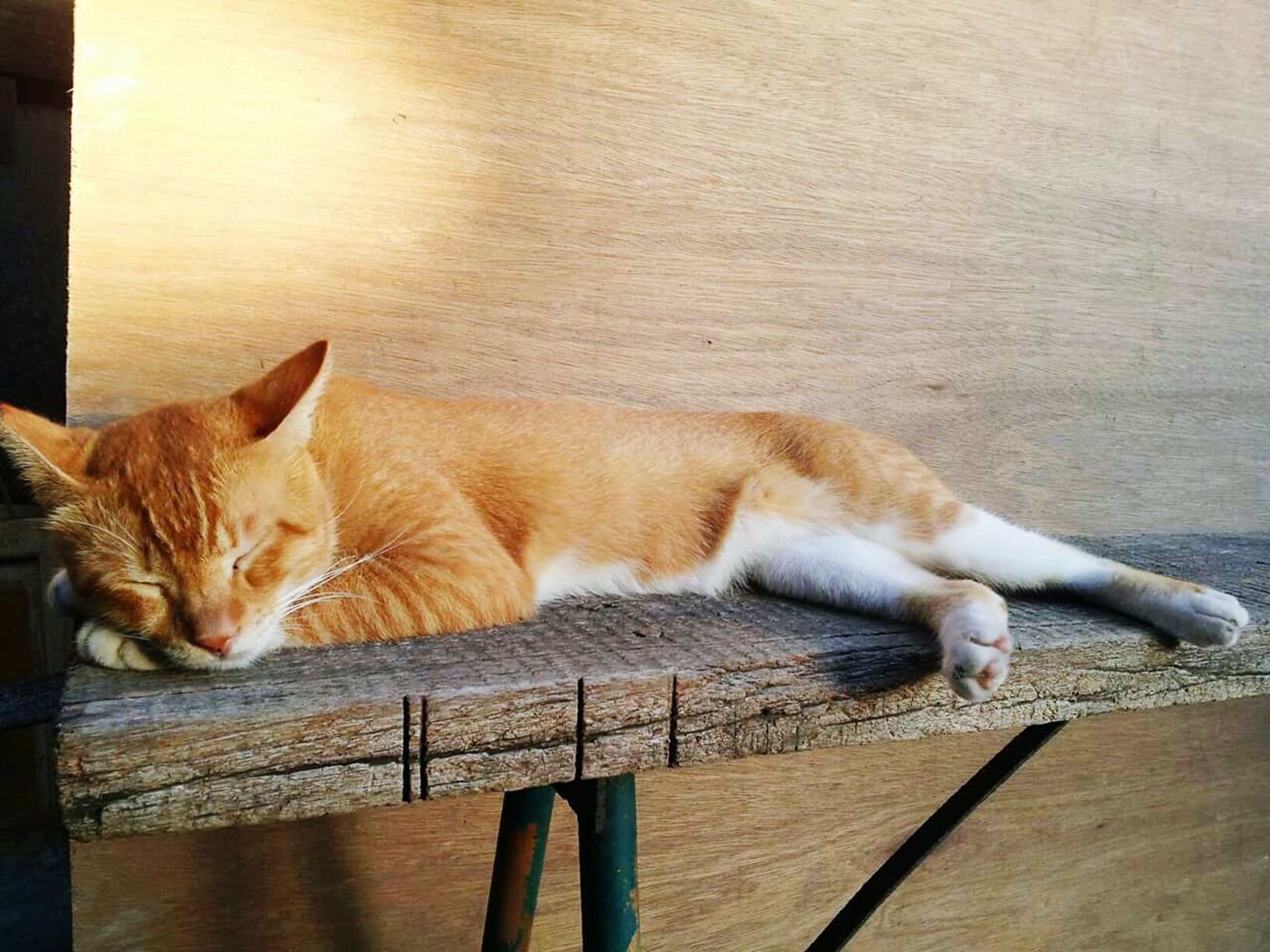 domestic cat, cat, domestic animals, pets, mammal, feline, animal themes, one animal, relaxation, whisker, resting, indoors, lying down, sleeping, wall - building feature, relaxing, portrait, no people, looking at camera, wood - material