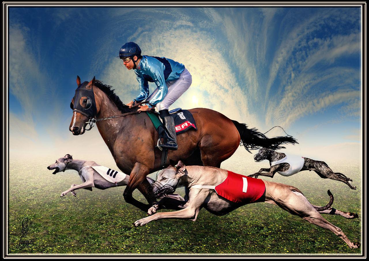 Animal Animal Themes ArtWork Composing Coursing Dogs Horse Racing