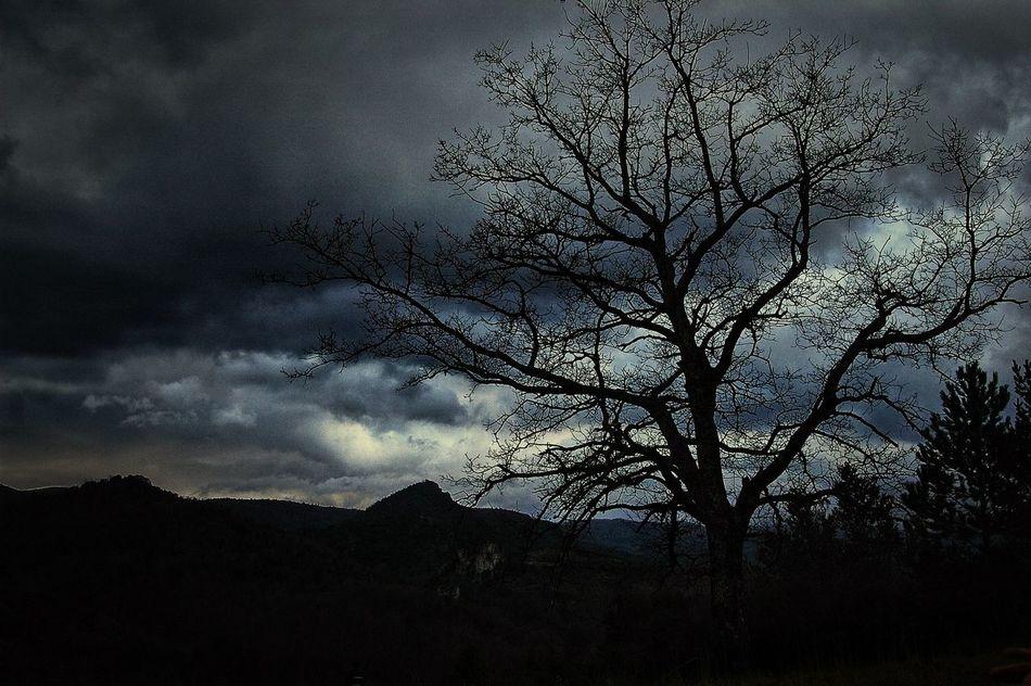 Arbre Tree Rsa_nature Rsa_dark