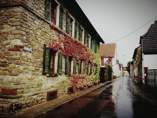 Autumn Autumn🍁🍁🍁 Rain Winter Cold Colorful Tree Leaves Trees Old Neighborhoods Rheinland-Pfalz  Ph Photography Photo Photograph Germany Photos Deutschland German Germany🇩🇪 Lens Focus Day_photography City Kamera Guntersblum Mainz