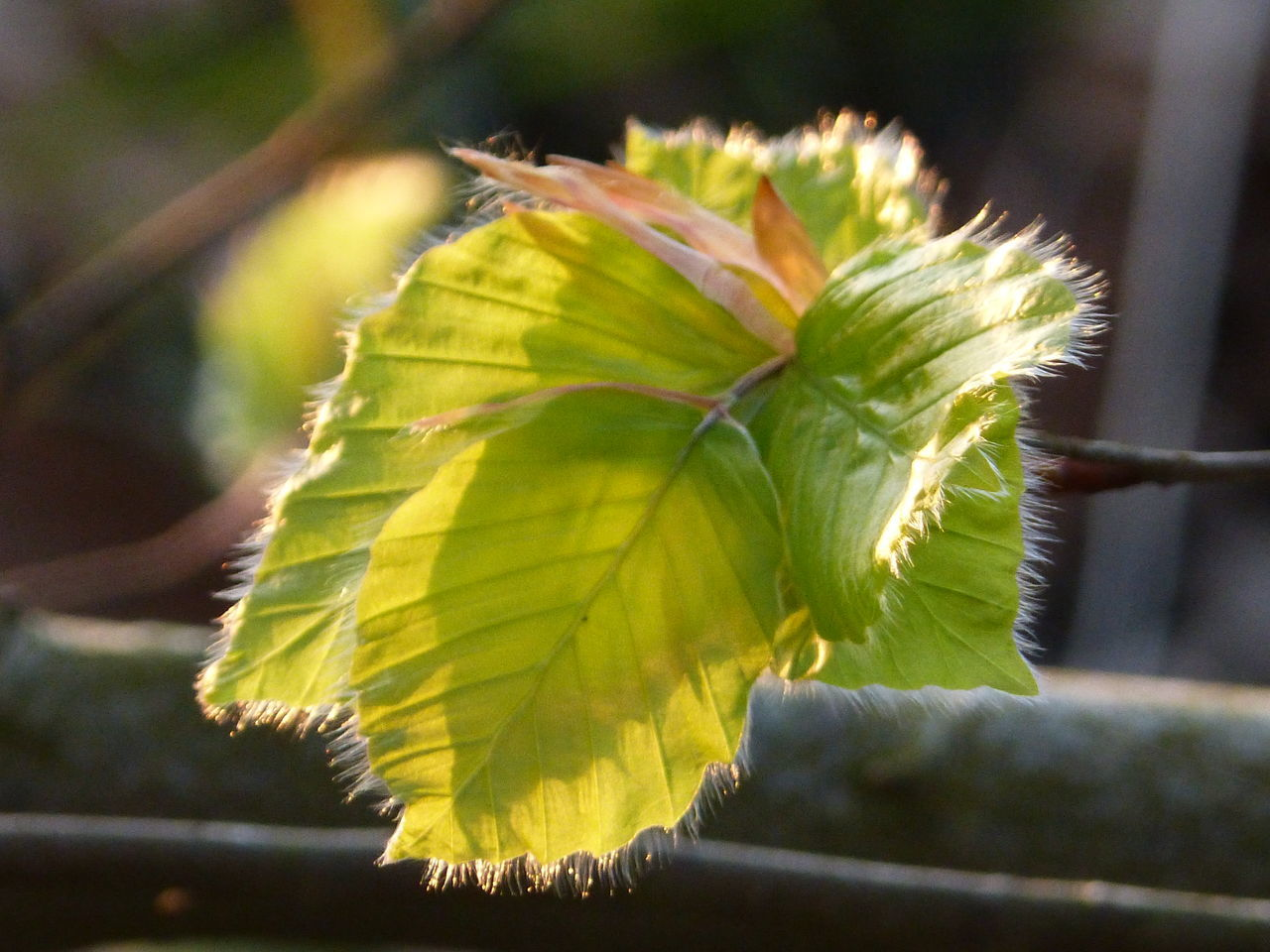 leaf, nature, close-up, growth, plant, no people, green color, focus on foreground, day, outdoors, beauty in nature, fragility, freshness