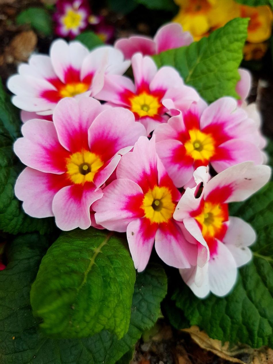 Que raro yo... con flores? 🤔 Flower Petal Beauty In Nature Freshness Flower Head Nature Pink Color Plant No People Growth Leaf Fragility Close-up Outdoors Day Stamen Springtime Water Symplicity Españoles Y Sus Fotos Streamzoofamily
