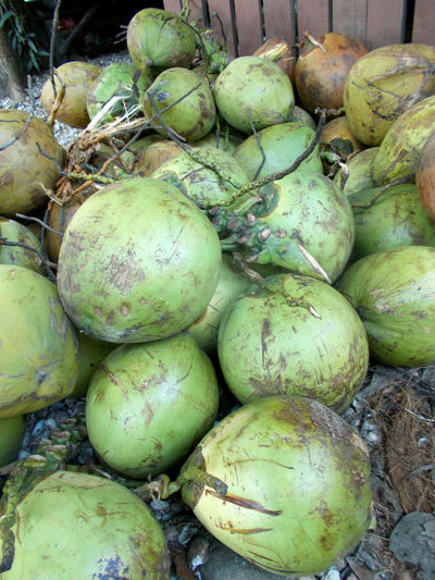 Green coconuts fruit healthy on market Close-up Cocoanut Coconut Cocos Nucifera Day Diet Food Food Food And Drink Freshness Green Coconut Green Color Healthy Eating Healthy Food Healthy Fruit Market No People Outdoors Sell Shop Tropical Fruit Vegetable